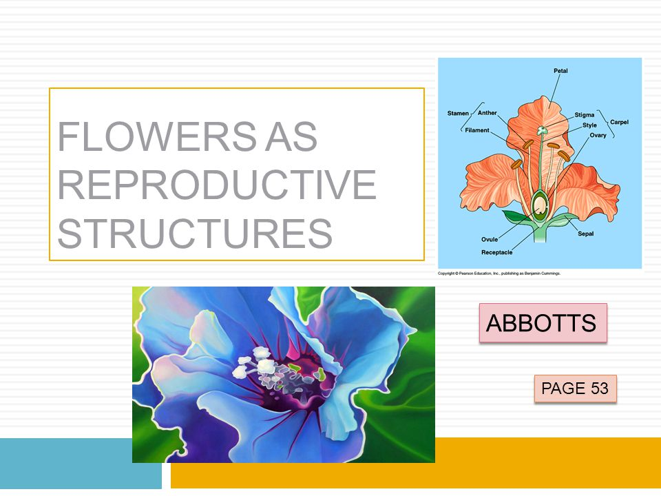 FLOWERS AS REPRODUCTIVE STRUCTURES ABBOTTS PAGE 53