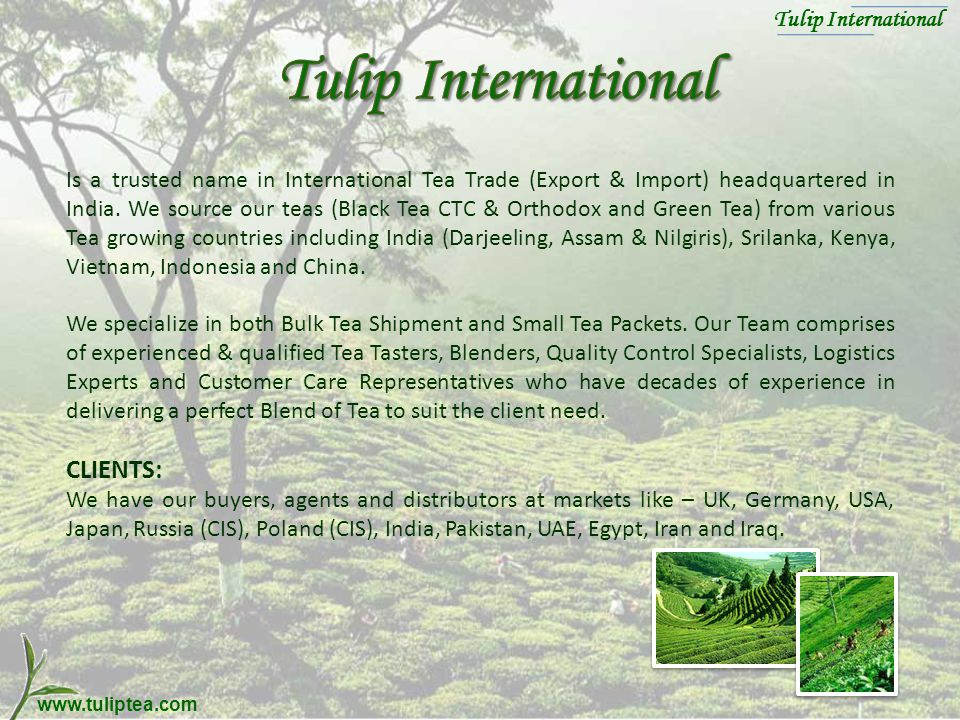 Tulip International dsd Tulip International dsd Orthodox, CTC and Green Tea Sourcing, Blending & Exports www.tuliptea.com Tulip International dsd Tulip International dsd Orthodox, CTC and Green Tea Sourcing, Blending & Exports www.tuliptea.com