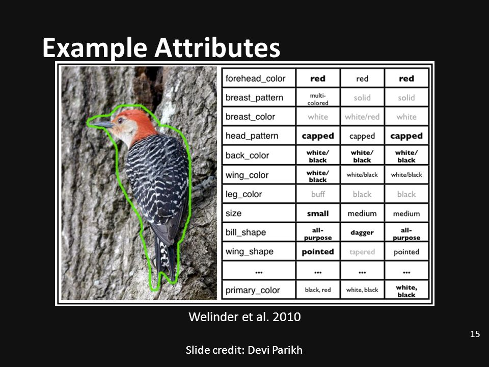 Example Attributes Welinder et al. 2010 15 Slide credit: Devi Parikh