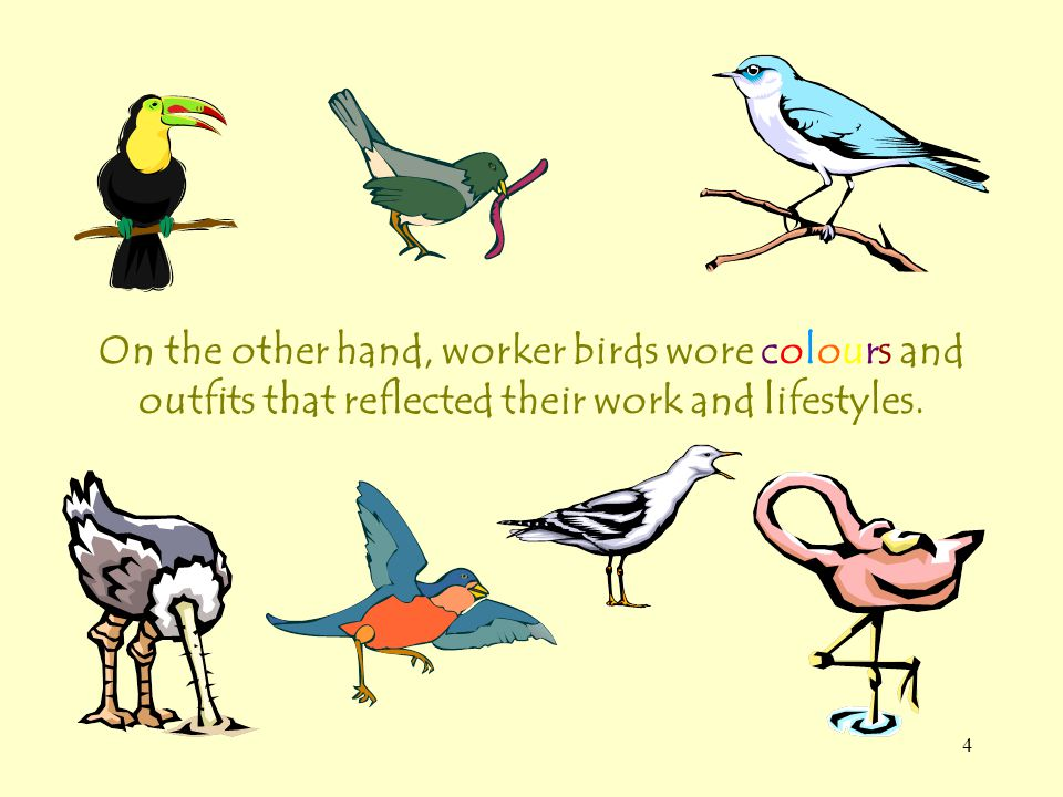 4 On the other hand, worker birds wore colours and outfits that reflected their work and lifestyles.