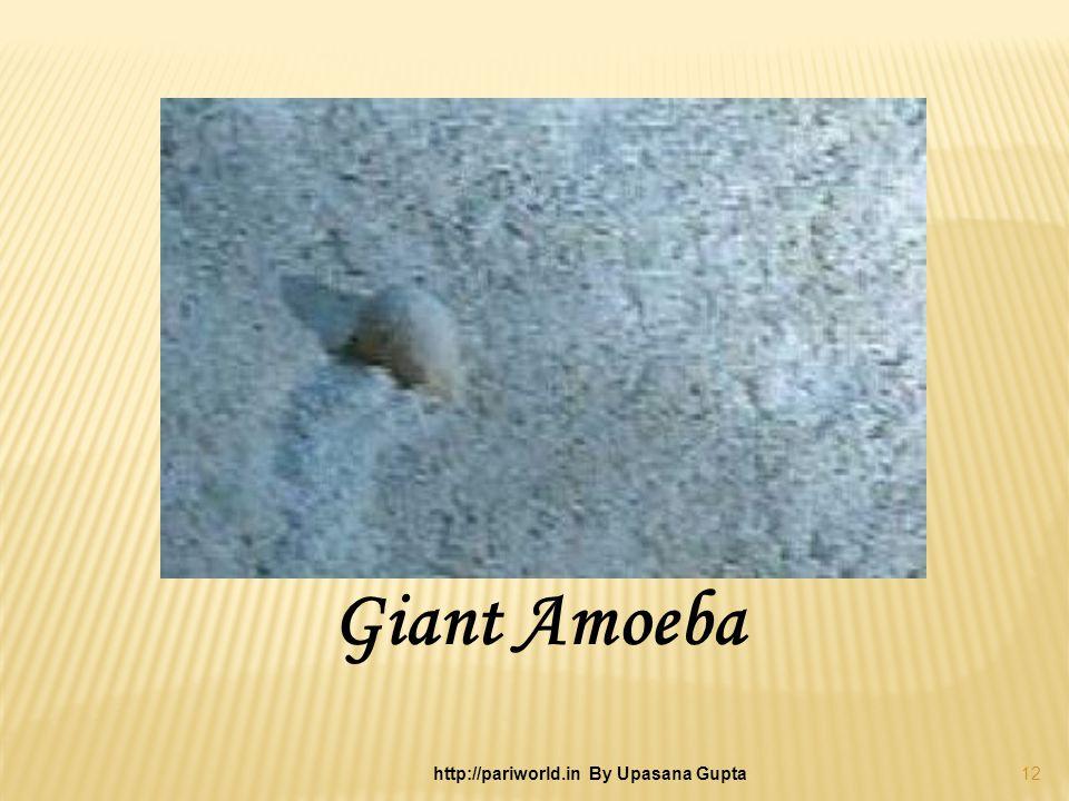 Giant Amoeba 12 http://pariworld.in By Upasana Gupta