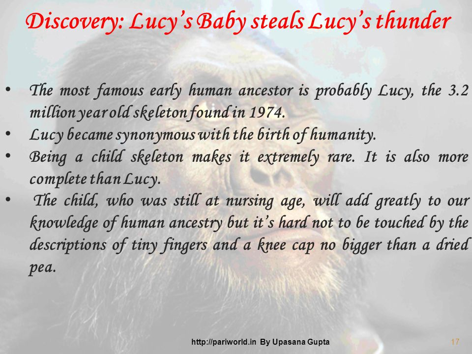 The most famous early human ancestor is probably Lucy, the 3.2 million year old skeleton found in 1974.