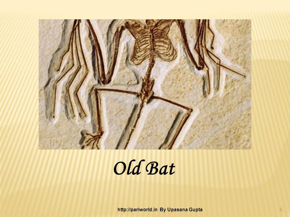 Old Bat 6 http://pariworld.in By Upasana Gupta