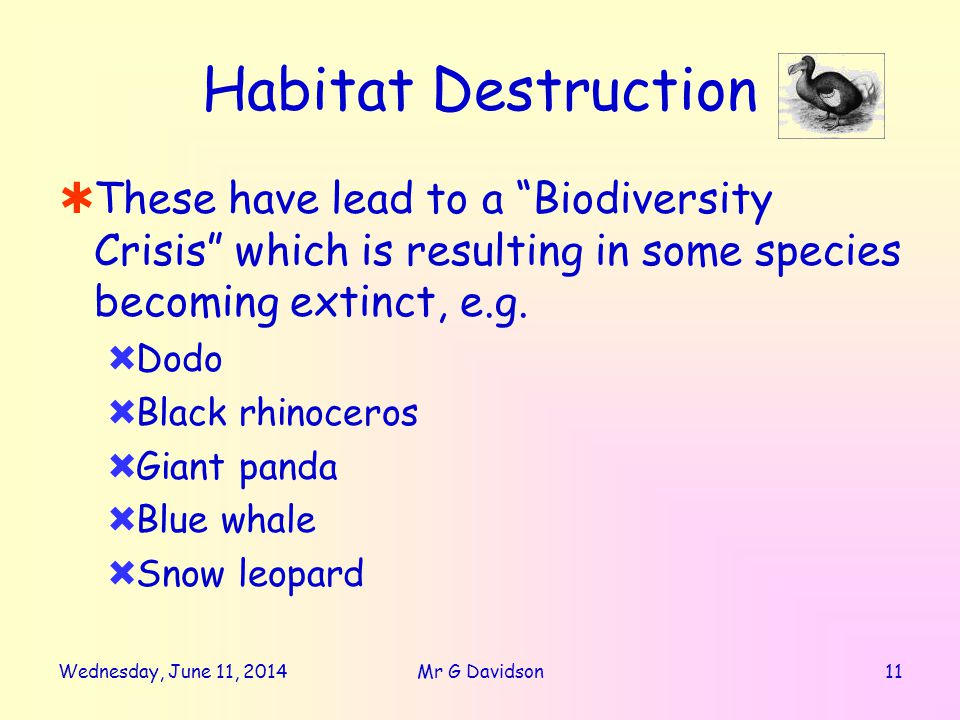Wednesday, June 11, Mr G Davidson Habitat Destruction These have lead to a Biodiversity Crisis which is resulting in some species becoming extinct, e.g.