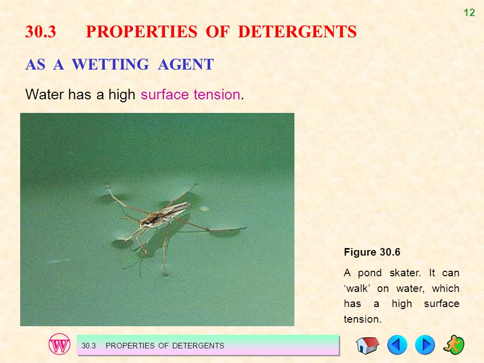 12 30.3 PROPERTIES OF DETERGENTS AS A WETTING AGENT Water has a high surface tension. Figure 30.6 A pond skater. It can walk on water, which has a hig