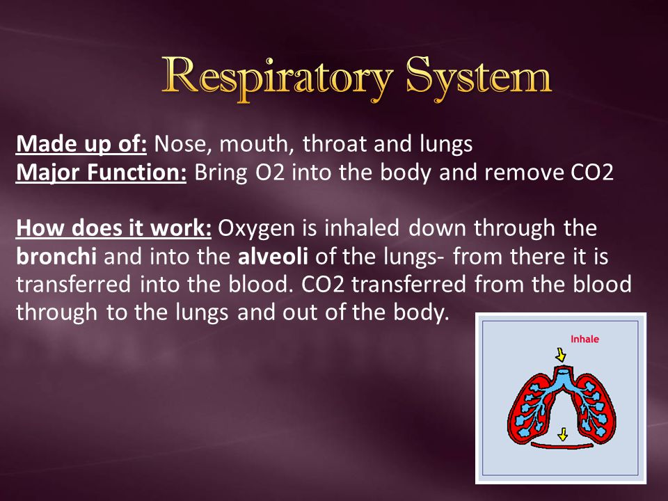 Response to Exercise: Breathing occurs faster and more deeply- This allows more oxygen to be inhaled and transferred to the blood and to the muscles.