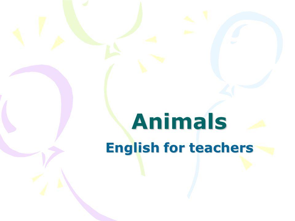 Animals English for teachers