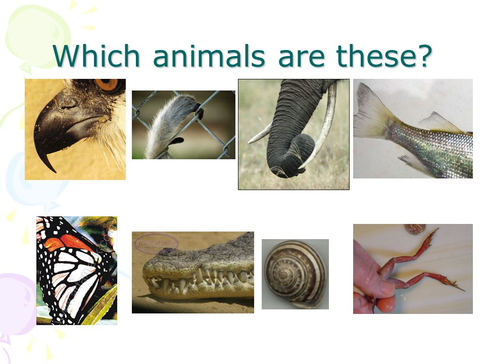 Match animals and words wings – legs – feathers – scales – gills – tail – shell – trunk – fur - beak Swim – fly – jump – slither - crawl