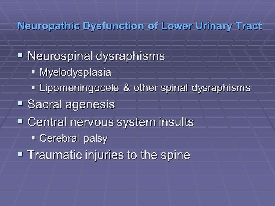 Neurospinal dysraphisms Neurospinal dysraphisms Myelodysplasia Myelodysplasia Lipomeningocele & other spinal dysraphisms Lipomeningocele & other spina