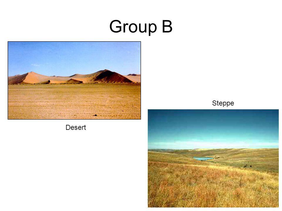 Group B Desert Steppe