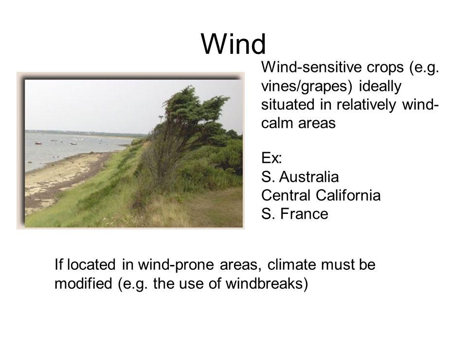 Wind Wind-sensitive crops (e.g.