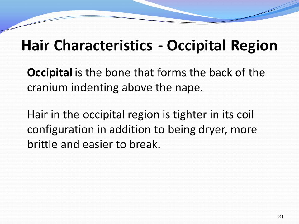 Hair Characteristics - Occipital Region Occipital is the bone that forms the back of the cranium indenting above the nape. Hair in the occipital regio