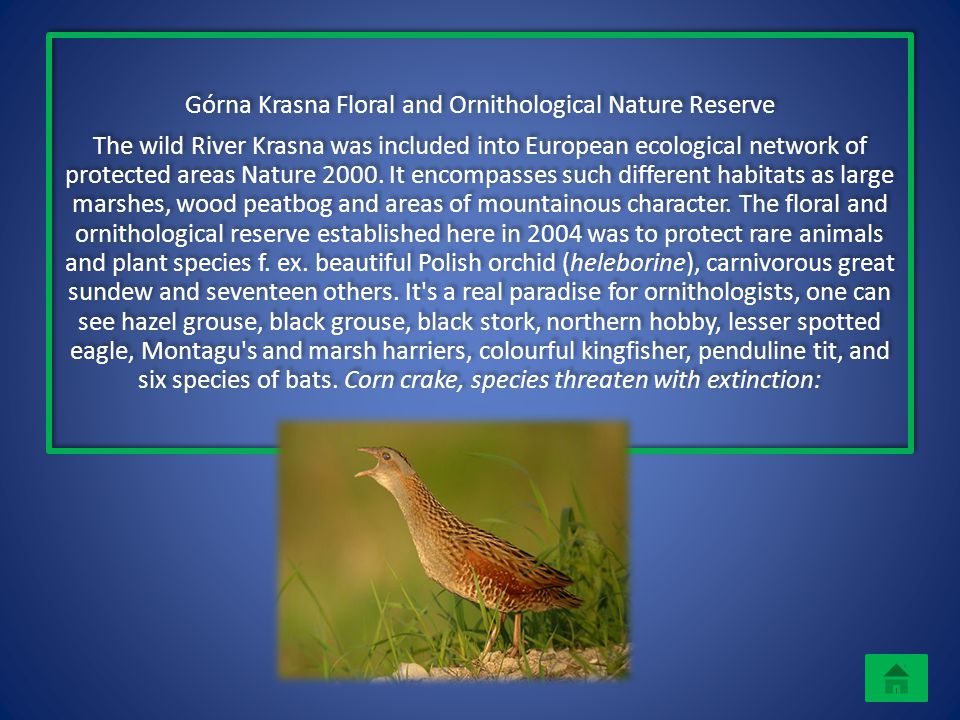 Górna Krasna Floral and Ornithological Nature Reserve The wild River Krasna was included into European ecological network of protected areas Nature 20