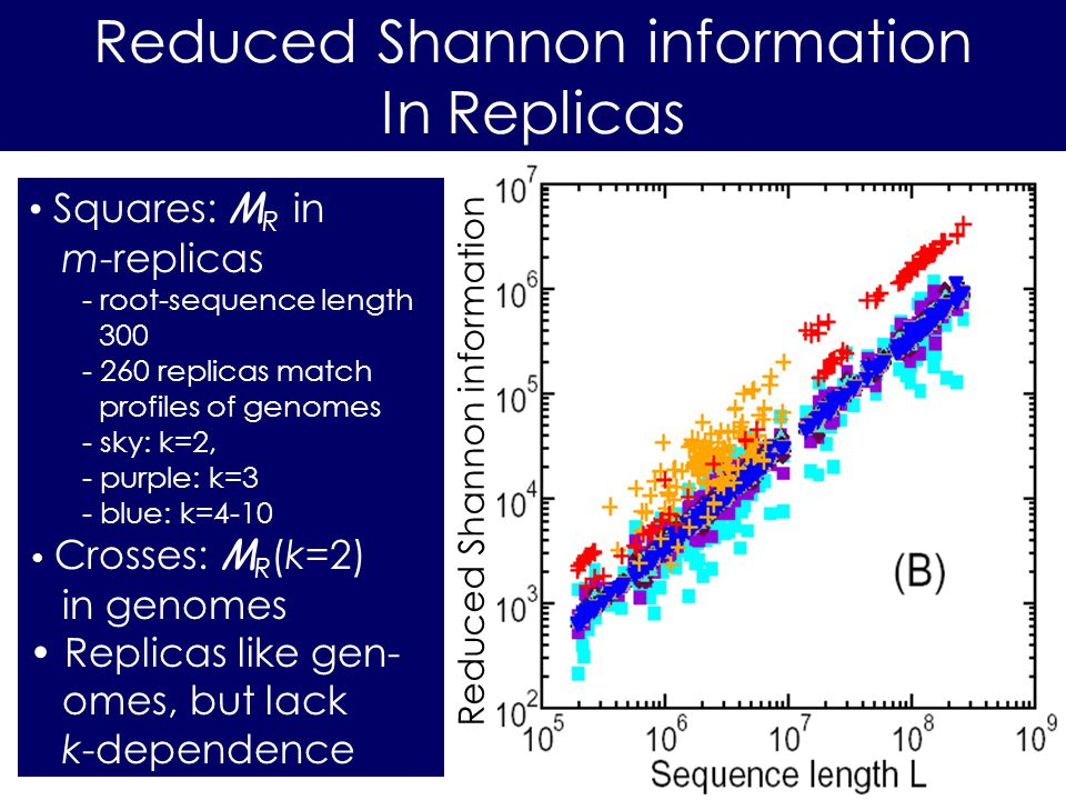 Reduced Shannon information In Replicas Squares: M R in m-replicas - root-sequence length 300 - 260 replicas match profiles of genomes - sky: k=2, - purple: k=3 - blue: k=4-10 Crosses: M R (k=2) in genomes Replicas like gen- omes, but lack k-dependence Reduced Shannon information