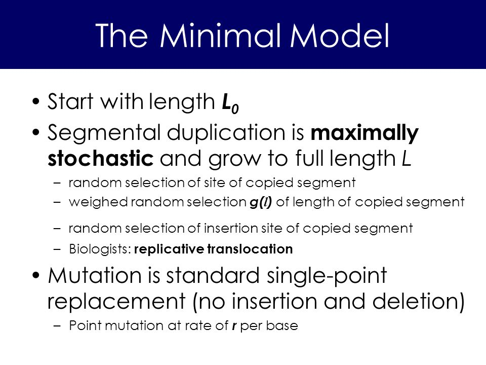 The Minimal Model Start with length L 0 Segmental duplication is maximally stochastic and grow to full length L –random selection of site of copied se
