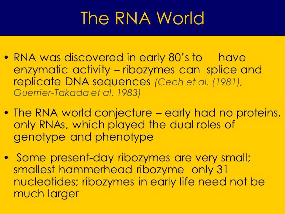 The RNA World RNA was discovered in early 80s to have enzymatic activity – ribozymes can splice and replicate DNA sequences (Cech et al.