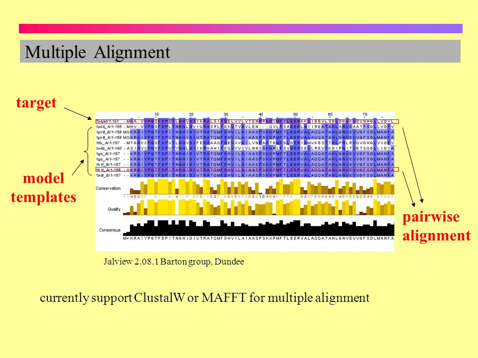 Multiple Alignment target model templates pairwise alignment Jalview 2.08.1 Barton group, Dundee currently support ClustalW or MAFFT for multiple alig