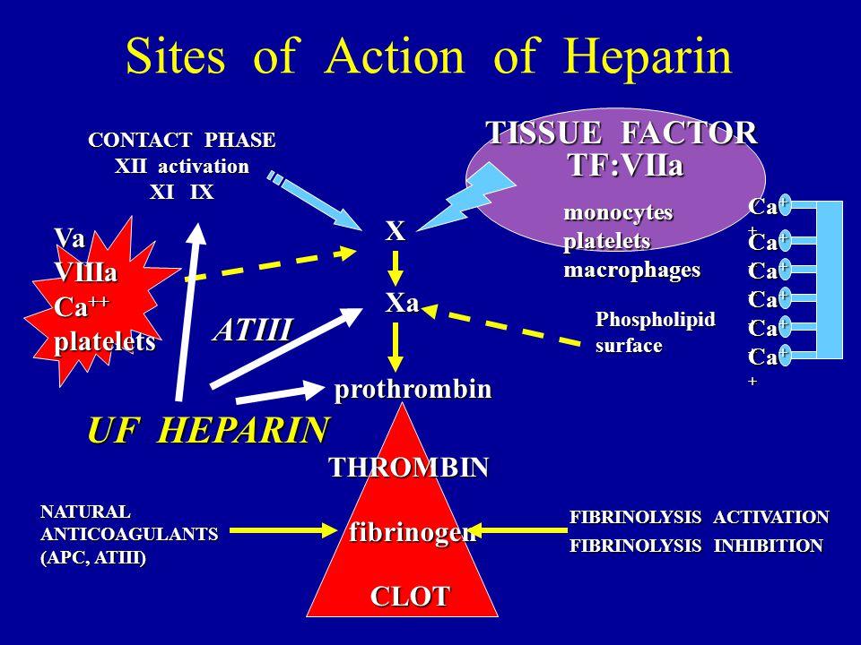 Sites of Action of Heparin CONTACT PHASE XII activation XI IX TISSUE FACTOR TF:VIIa THROMBIN fibrinogen prothrombin Xa VaVIIIa Ca ++ platelets CLOT mo