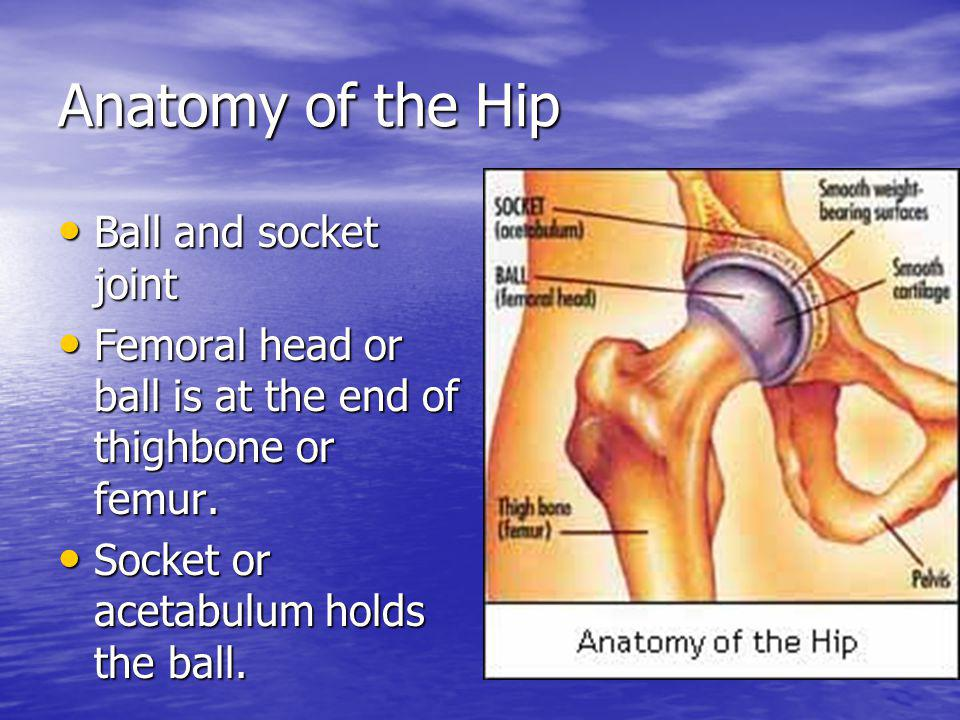 Anatomy of the Hip Ball and socket joint Ball and socket joint Femoral head or ball is at the end of thighbone or femur. Femoral head or ball is at th