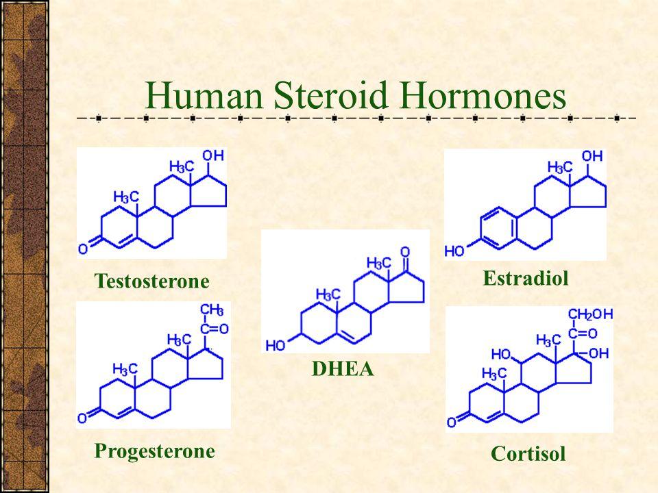 Human Steroid Hormones Testosterone Estradiol Progesterone Cortisol DHEA
