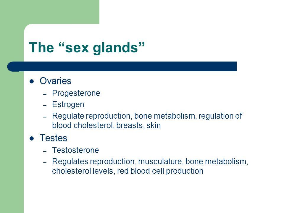 The sex glands Ovaries – Progesterone – Estrogen – Regulate reproduction, bone metabolism, regulation of blood cholesterol, breasts, skin Testes – Tes