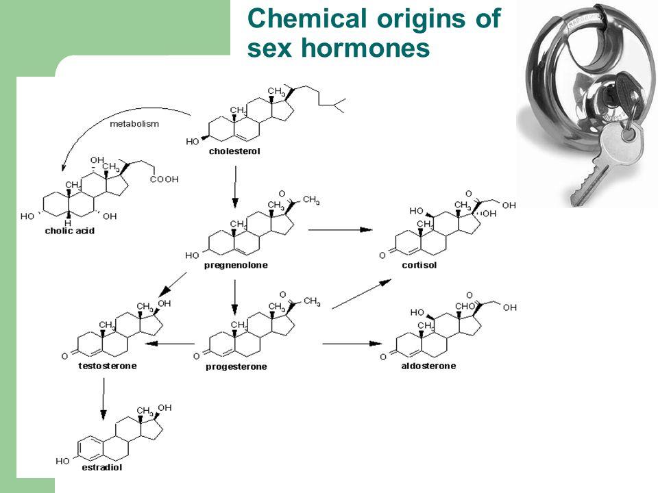 Chemical origins of sex hormones