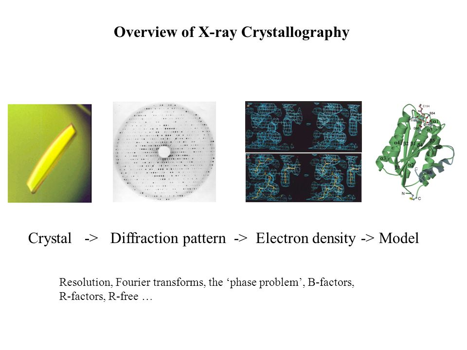 Crystal -> Diffraction pattern -> Electron density -> Model Overview of X-ray Crystallography Resolution, Fourier transforms, the phase problem, B-fac