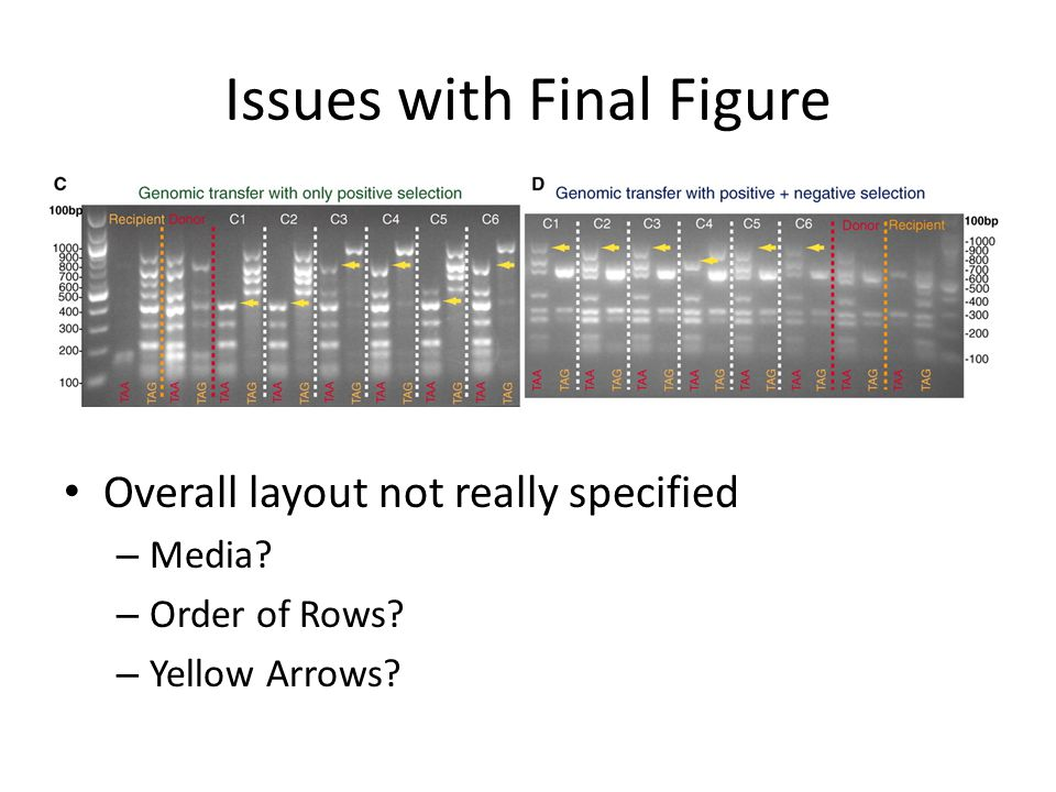 Issues with Final Figure Overall layout not really specified – Media.