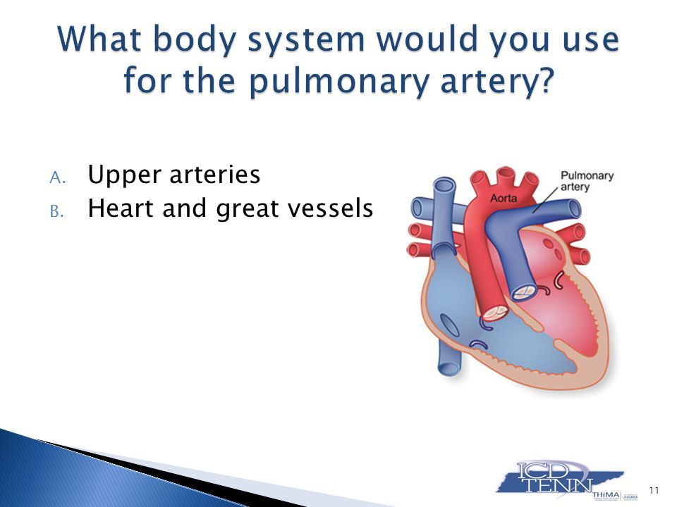 A. Upper arteries B. Heart and great vessels 11