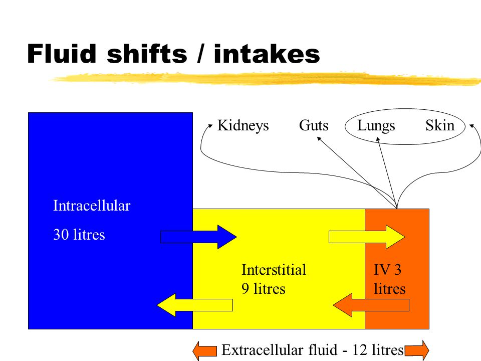 Fluid shifts / intakes Intracellular 30 litres Interstitial 9 litres IV 3 litres Kidneys Guts Lungs Skin Extracellular fluid - 12 litres