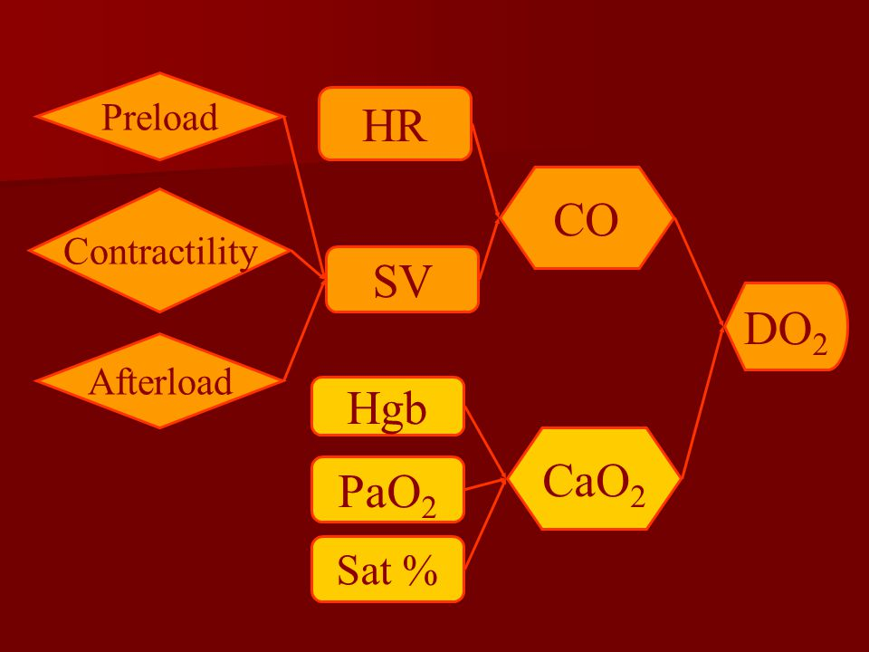 DO 2 CaO 2 CO Sat % PaO 2 Hgb HR SV Preload Contractility Afterload