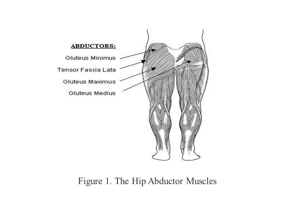 Figure 1. The Hip Abductor Muscles