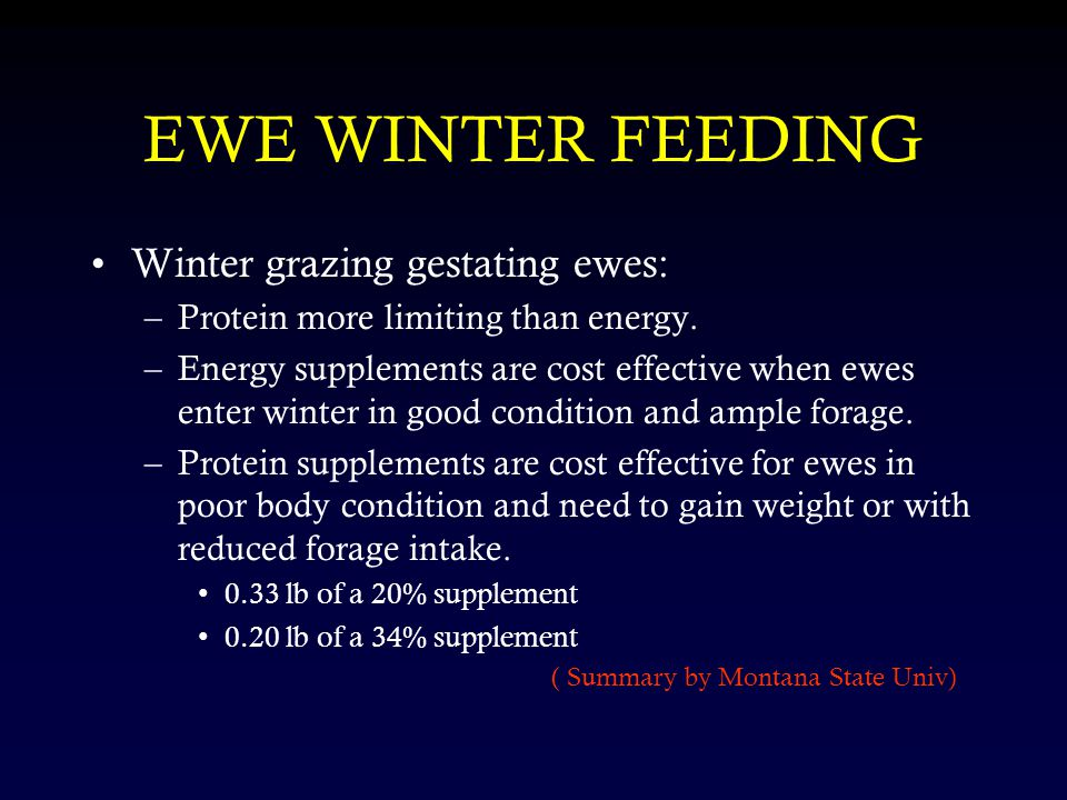 Winter grazing gestating ewes: –Protein more limiting than energy.