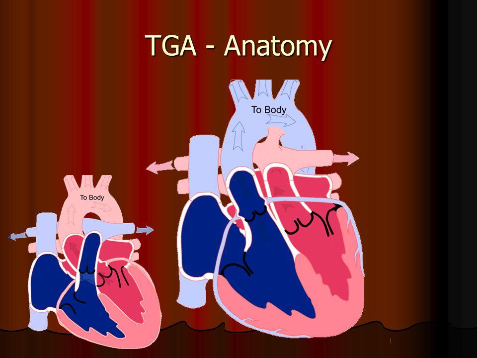 TGA - Anatomy