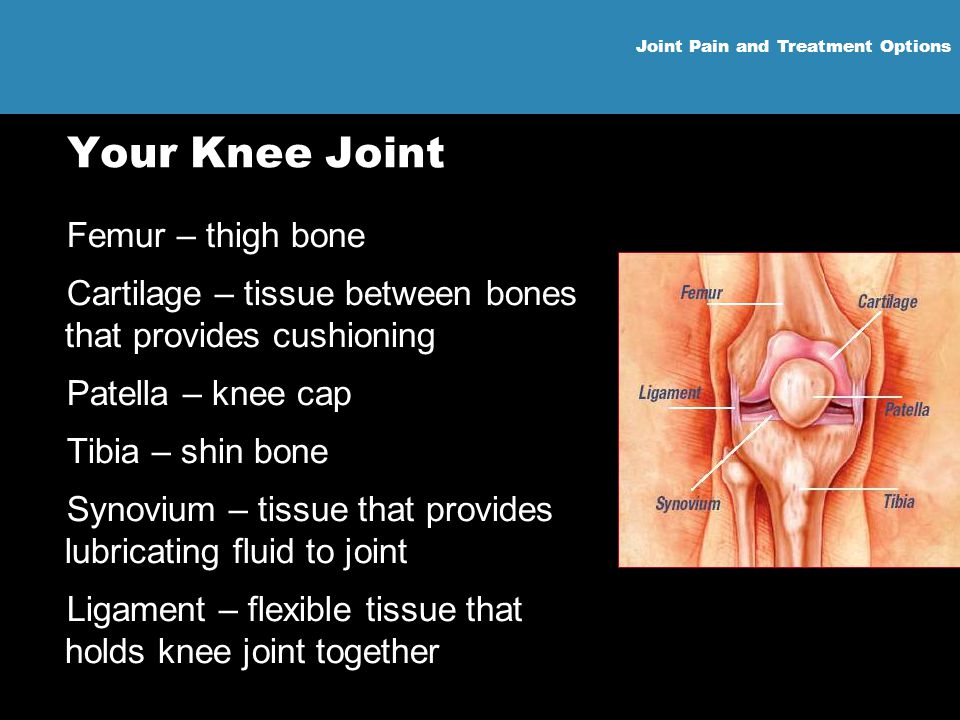 Joint Pain and Treatment Options Your Knee Joint Femur – thigh bone Cartilage – tissue between bones that provides cushioning Patella – knee cap Tibia