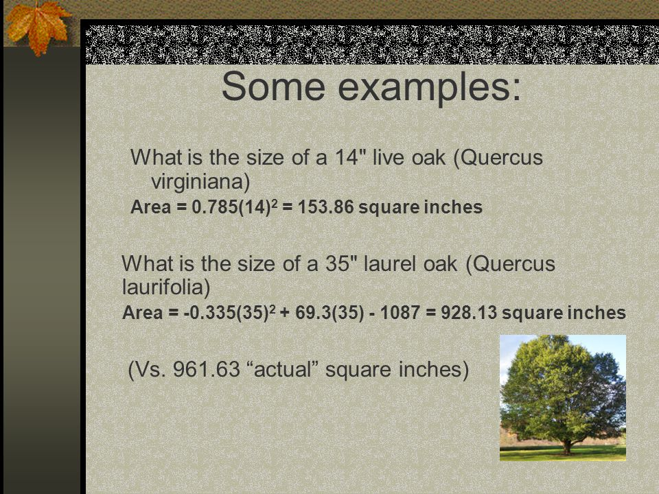 Some examples: What is the size of a 14