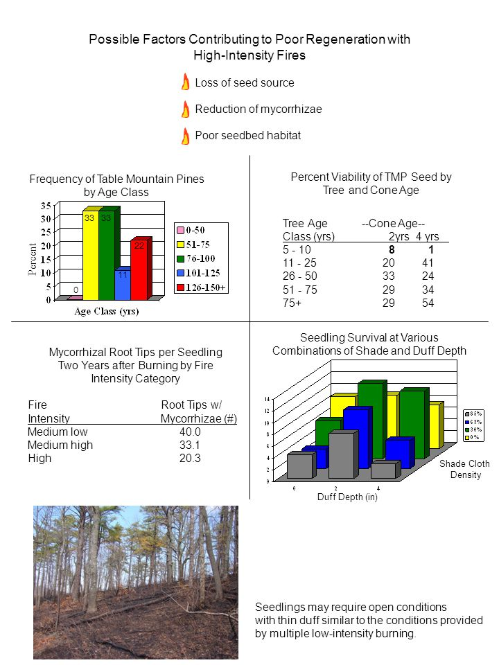 EARLY DYNAMICS OF TABLE MOUNTAIN PINE STANDS FOLLOWING STAND REPLACEMENT PRESCRIBED FIRES OF VARYING INTENSITY Abstract--Interest in using stand replacement prescribed fires to regenerate stands of Table Mountain pine (Pinus pungens) has increased in the past decade but the type and intensity of fire needed to achieve success has been undefined.
