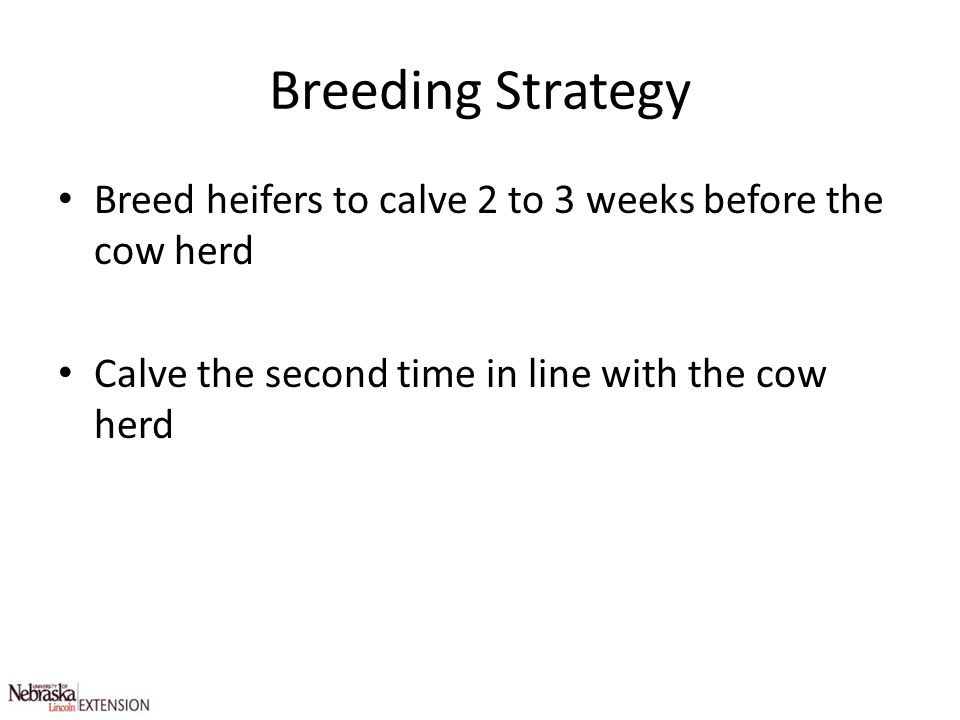 Breeding Strategy Breed heifers to calve 2 to 3 weeks before the cow herd Calve the second time in line with the cow herd