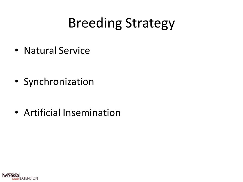 Breeding Strategy Natural Service Synchronization Artificial Insemination