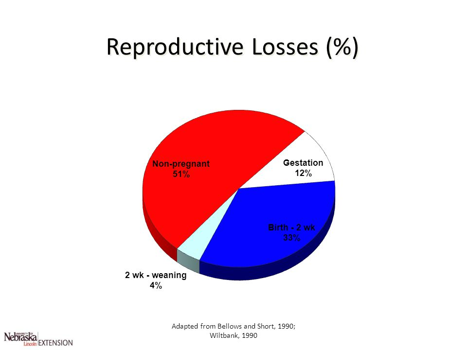 Adapted from Bellows and Short, 1990; Wiltbank, 1990 Reproductive Losses (%)