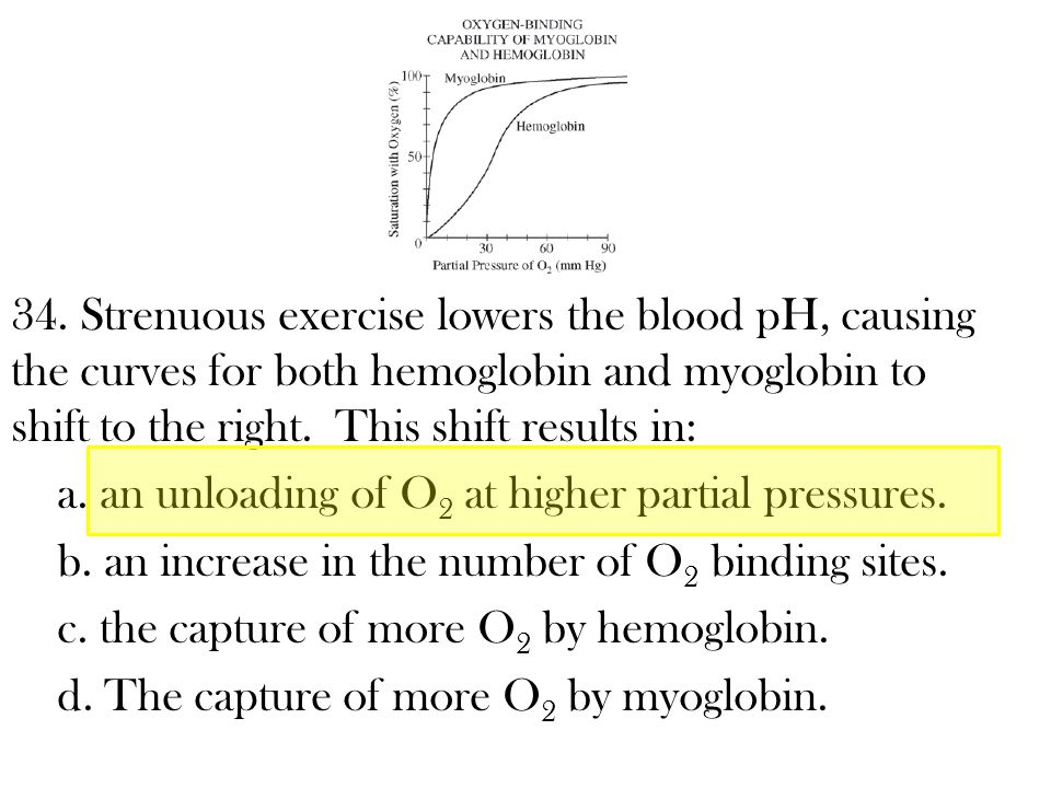 34. Strenuous exercise lowers the blood pH, causing the curves for both hemoglobin and myoglobin to shift to the right. This shift results in: a. an u