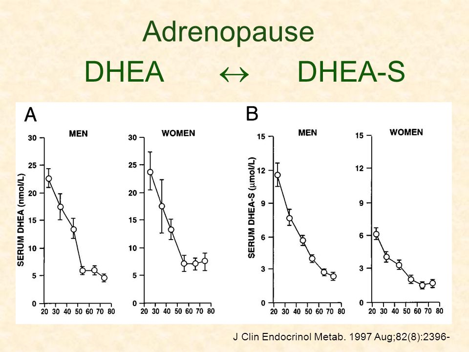DHEA DHEA-S J Clin Endocrinol Metab. 1997 Aug;82(8):2396- 402 Adrenopause