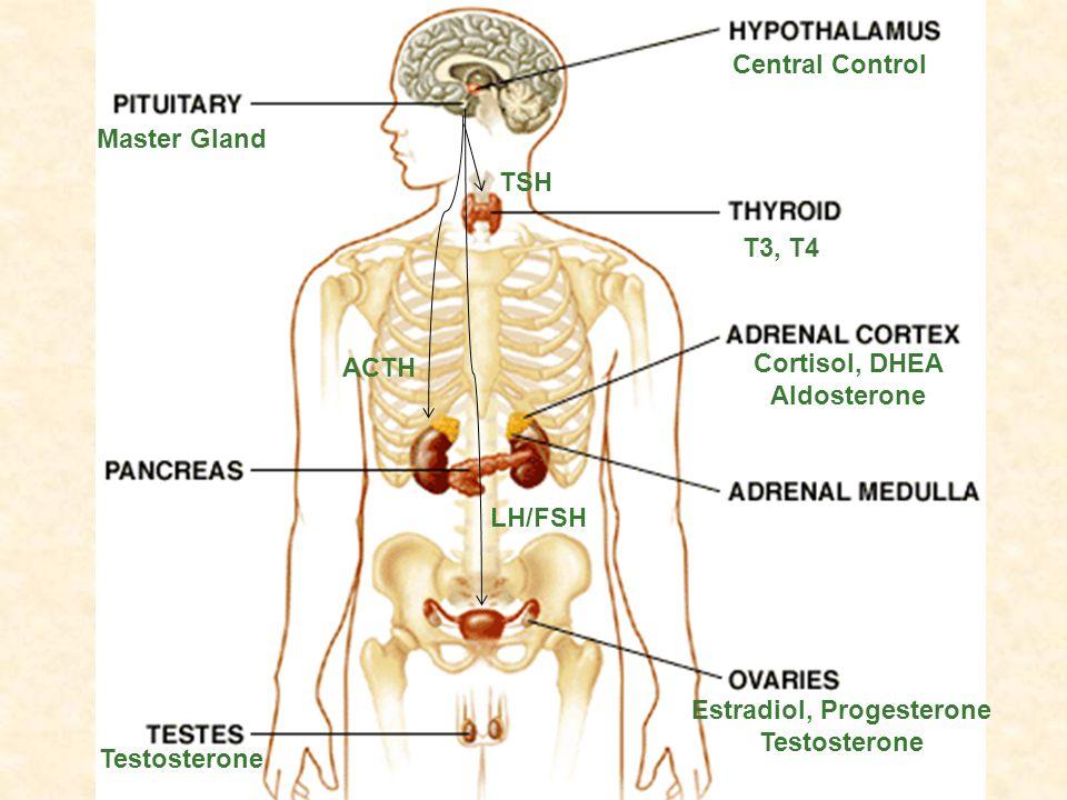 Master Gland Central Control TSH ACTH LH/FSH T3, T4 Cortisol, DHEA Aldosterone Estradiol, Progesterone Testosterone