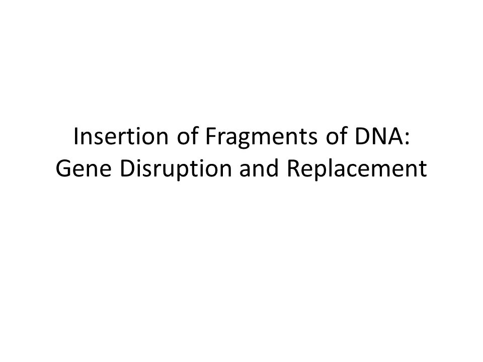 Insertion of Fragments of DNA: Gene Disruption and Replacement