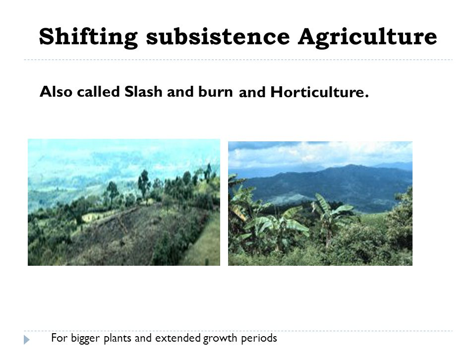 Plantation Agriculture Large monocultures of cash crops in tropical settings intended for export.