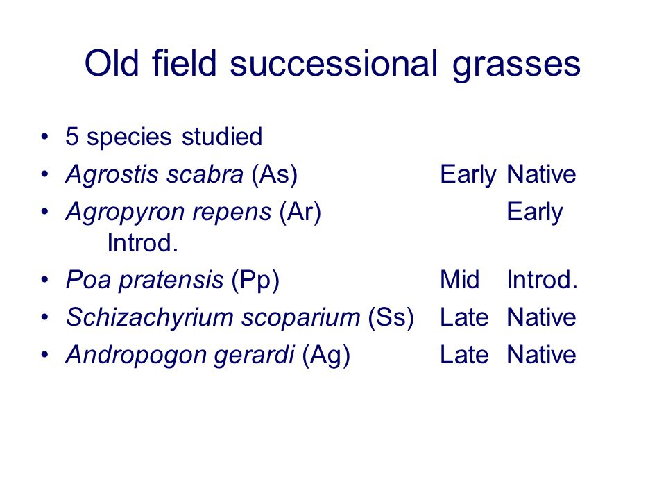 Old field successional grasses 5 species studied Agrostis scabra (As)EarlyNative Agropyron repens (Ar)Early Introd. Poa pratensis (Pp)MidIntrod. Schiz