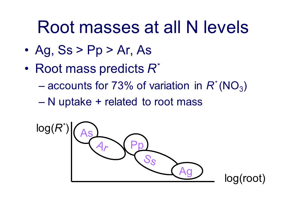 Root masses at all N levels Ag, Ss > Pp > Ar, As Root mass predicts R * –accounts for 73% of variation in R * (NO 3 ) –N uptake + related to root mass