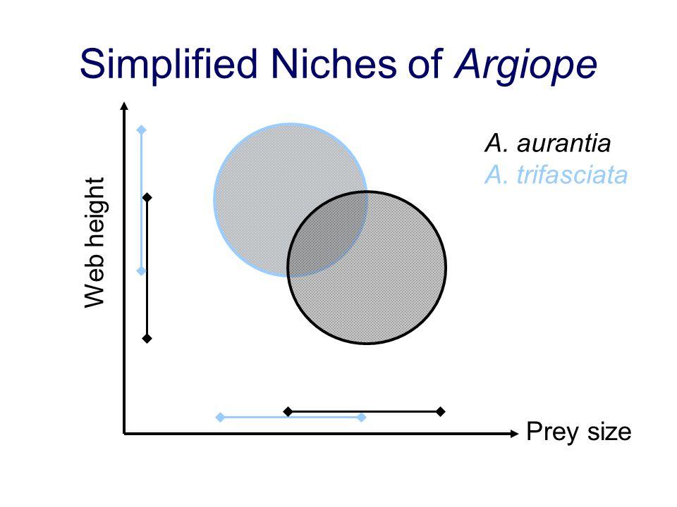 Simplified Niches of Argiope Prey size Web height A. aurantia A. trifasciata