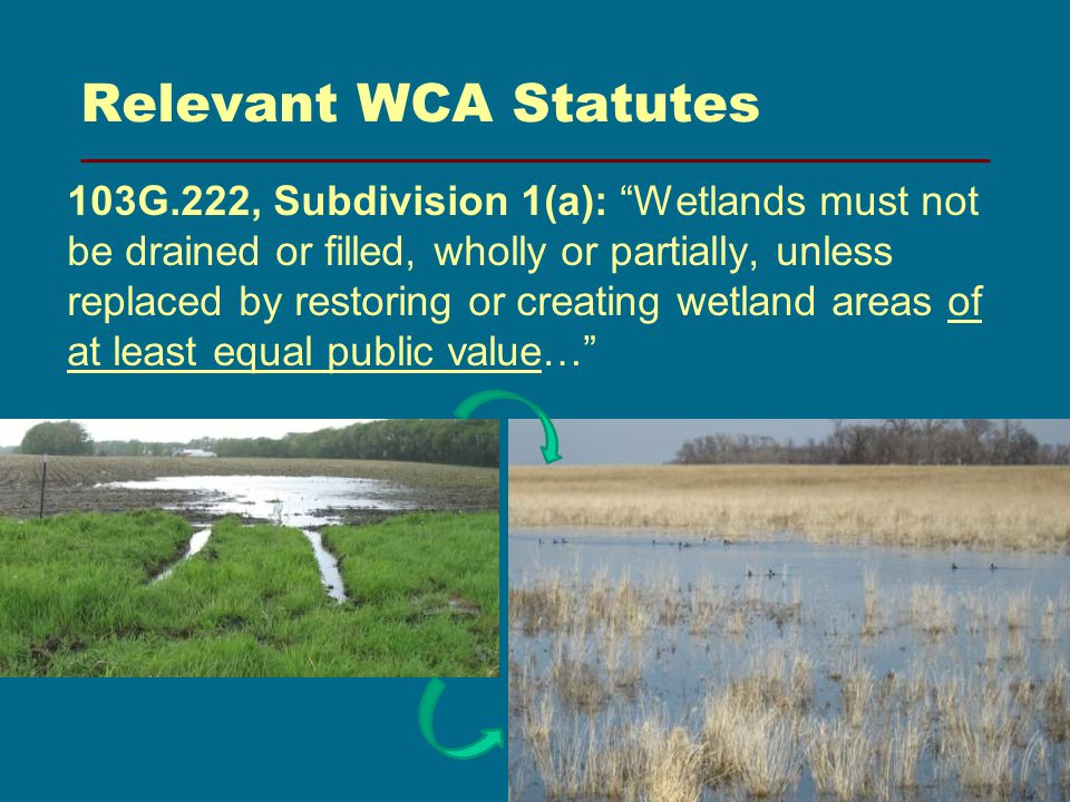 Relevant WCA Statutes G.222, Subdivision 1(a): Wetlands must not be drained or filled, wholly or partially, unless replaced by restoring or creating wetland areas of at least equal public value…