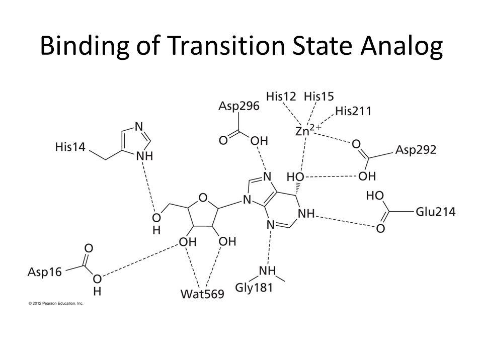 Binding of Transition State Analog